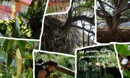 Insel Réunion : ein Land der Abenteuer
